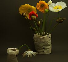 The Tall Poppies by Amy Gray