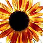 Sun like by mcval