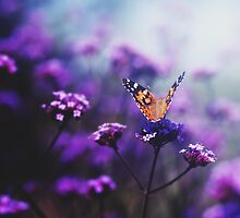 butterfly - in love with you, no 2 by thedannie