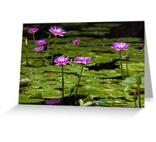 Waterlilies at Mt. Coot-tha Greeting Card