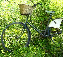 Vintage classical Bicycle against a tree by Ron Zmiri