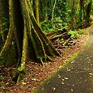 Rainforest in the Dorrigo National Park by Darren Stones