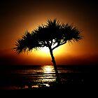 Tropical Silhouette by Josh Meggs