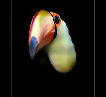 Toucan by hannahelizabeth