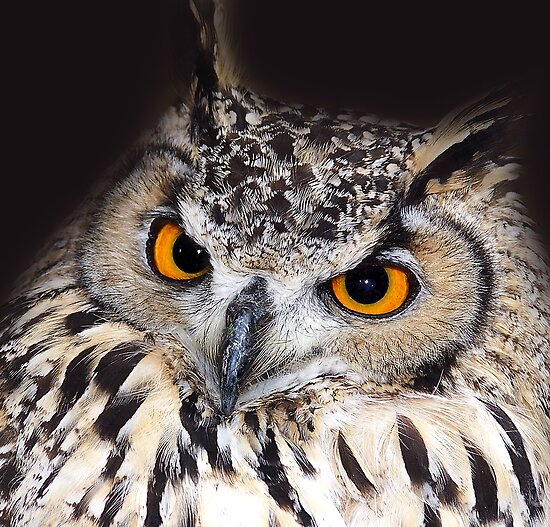 European Eagle Owl by LisaRoberts