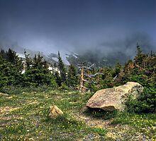 Among the Alpine by John  De Bord Photography