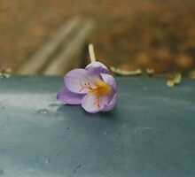 Lovely Lonely Purple Flower by Debja