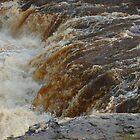 rapids by Steve