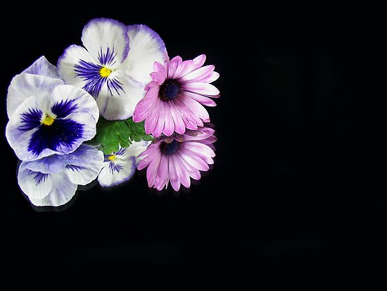 Double Colors by Maria Dryfhout