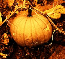 Pumpkin in Sepia by Deborah Duvall