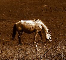 BAD SHAPE HORSE by Sorin  Reck