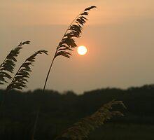 sundown by strypes