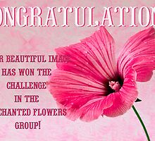 Banner for Enchanted Flowers Group  by Sandra Foster