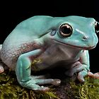 Whites tree frog by AngiNelson