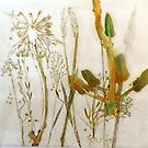 "Mornington Peninsula Grasslands 9 by Belinda ""BillyLee"" NYE (Printmaker)"