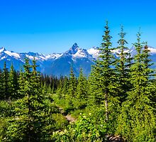 Rocky mountain  Meadows by RevelstokeImage