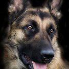The German Sheperd by Moth