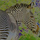 Zebra Head by Matt Dawdy