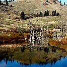 Rose's Pond by vernonite