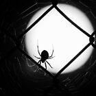 The Widow by David  Postgate