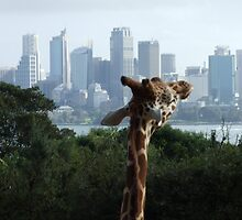 Giraffe and the City by Ben de Putron