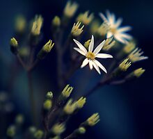White Flowers by Mike Bartley