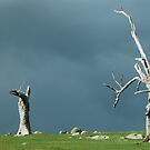 Trees in threes by gary A. trounson