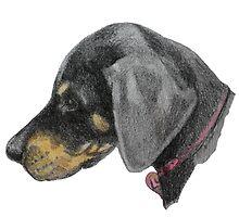 Doberman puppy by Monica Batiste