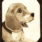 Beagle (pencil) by Deborah Duvall