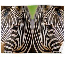 Mirrored Zebras Poster