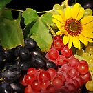 Sunlit Grapes by Karin  Hildebrand Lau
