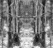 Trees_1 by Rachel Taylor