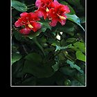 Vibrant Red Hibiscus - Cool Stuff by Maria A. Barnowl
