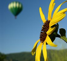 Balloon & Sunflower by cshphotos