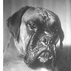 Quino, a boxer by Robert Elfferich