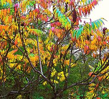 Staghorn Sumac by Gene Cyr