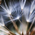 Dandelion by EdVincent