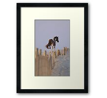 Wild Pony of Assateague Island Framed Print