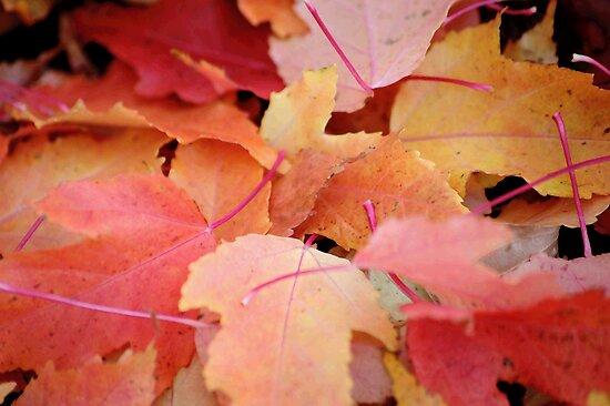 Fallen Leaves by cshphotos