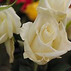 White Roses by Keala