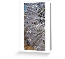 Dew drops on cactus 2 Greeting Card