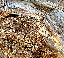 Antique Bark by Kathie Nichols