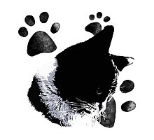 Cat with paws by stf-any