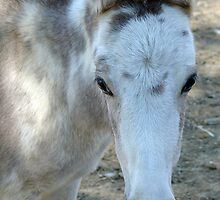 Miniature mule by Susy Rushing