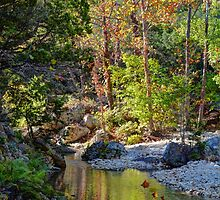 Small Pond at Lost Maples by venny
