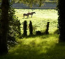 Sunlight and horses by Orla Flanagan