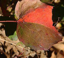 Patch Leaf by Matt Dawdy