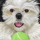 Black and White Shih Tzu Pillow with Tennis Ball by ibadishi