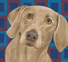 Light Brown Weimaraner on Blue / Red Background by ibadishi