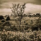 Vintage Style Autumn Landscape In The Park by MissDawnM